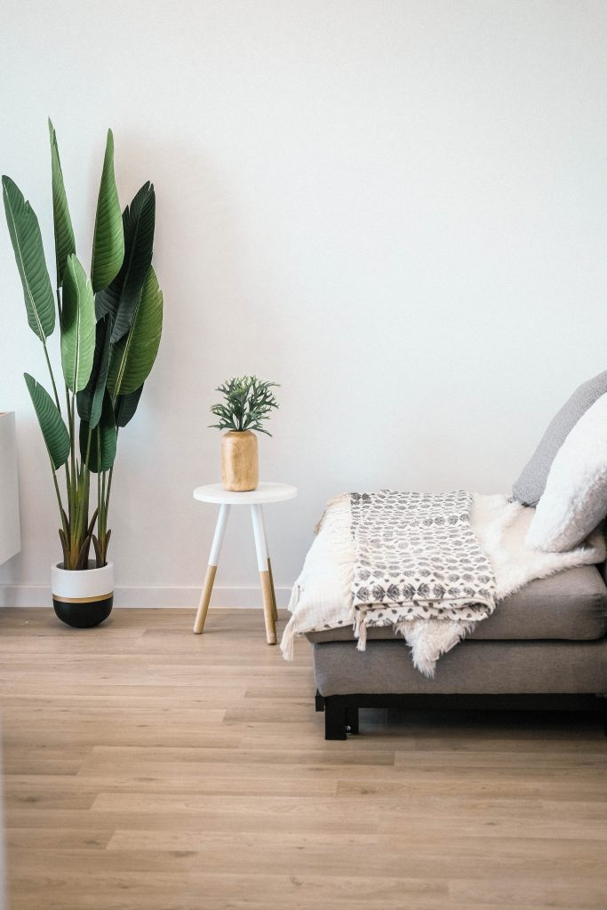 woonkamer plant